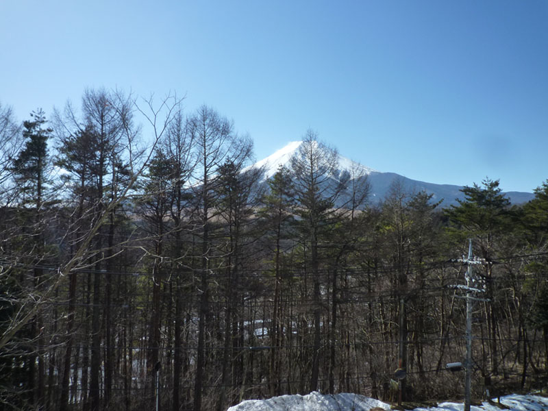 木々の向こうに富士山を望みます